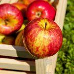 Estos son los alimentos que te ayudarán a combatir la alergia